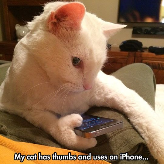 My Cat Has Thumbs And Uses An IPhone
