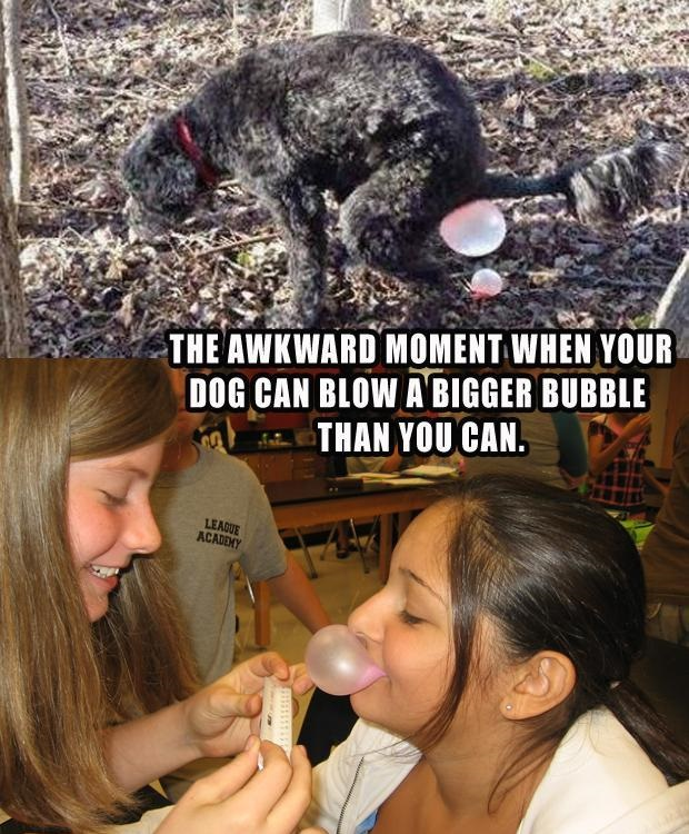 The Awkward Moment When Your Dog Can Blow A Bigger Bubble Than You