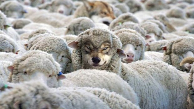 How-to-Detect-a-Wolf-in-Sheeps-Clothing.001