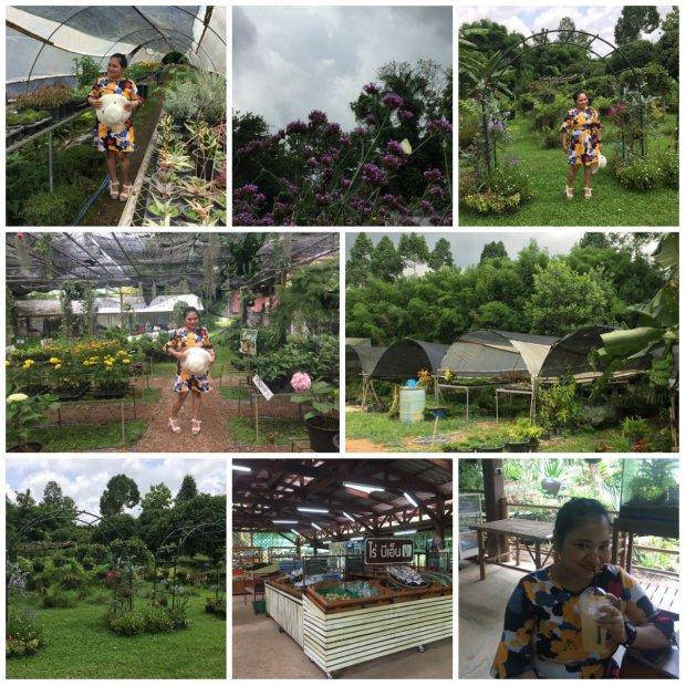 BN Farm